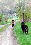 Akasha und Pastis beim Spaziergang in Unterlangnau